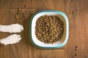 bowl of dog food on the floor with two white paws visible